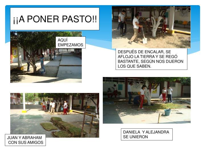 ¡¡A PONER PASTO!!