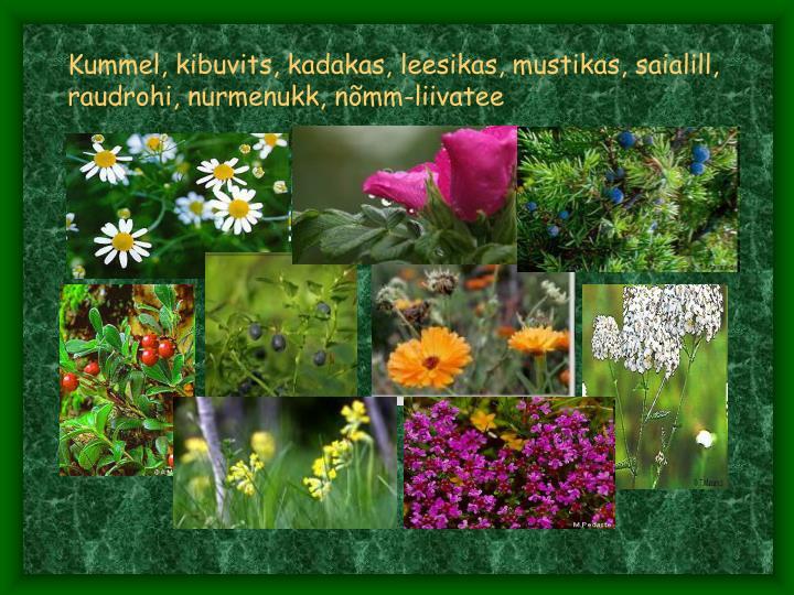 Kummel, kibuvits, kadakas, leesikas, mustikas, saialill, raudrohi, nurmenukk, nõmm-liivatee