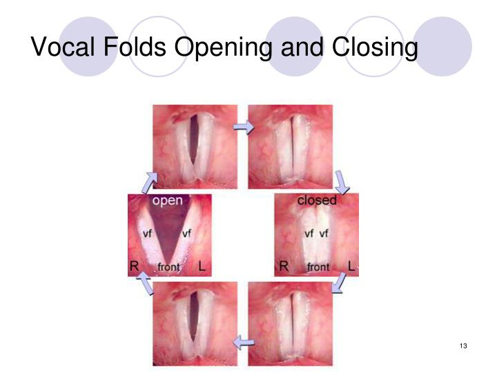 Vocal Folds Opening and Closing