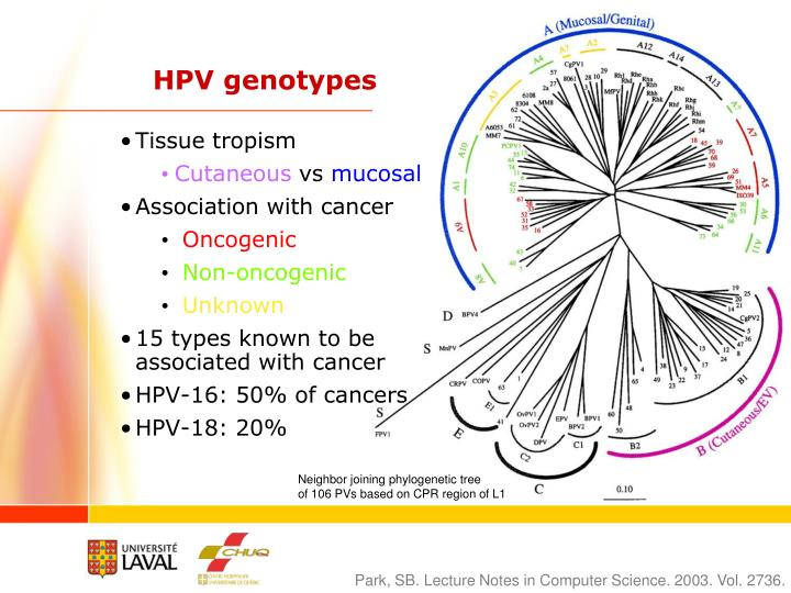 HPV genotypes