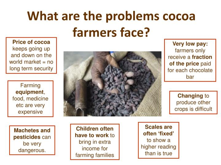 What are the problems cocoa farmers face?
