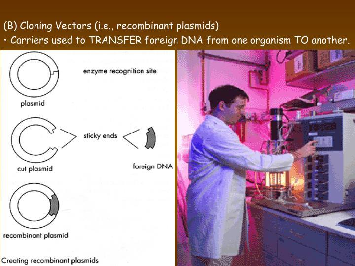 (B) Cloning Vectors (i.e., recombinant plasmids)