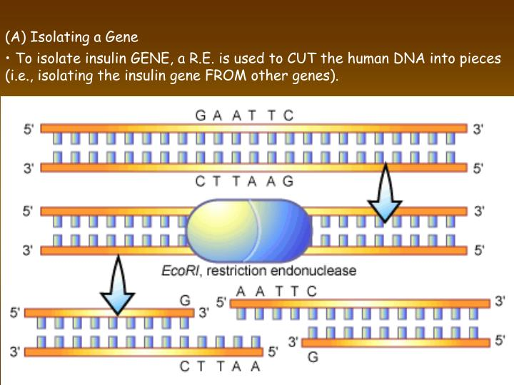 (A) Isolating a Gene