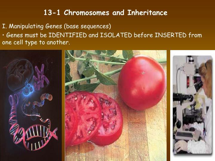 13-1 Chromosomes and Inheritance
