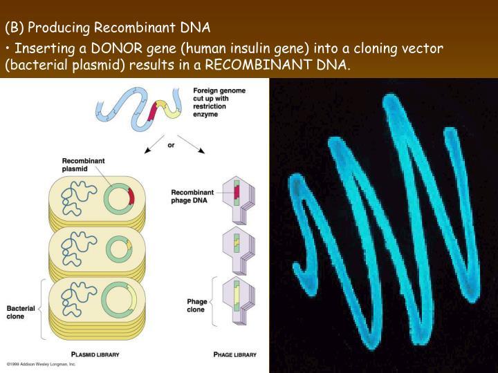 (B) Producing Recombinant DNA