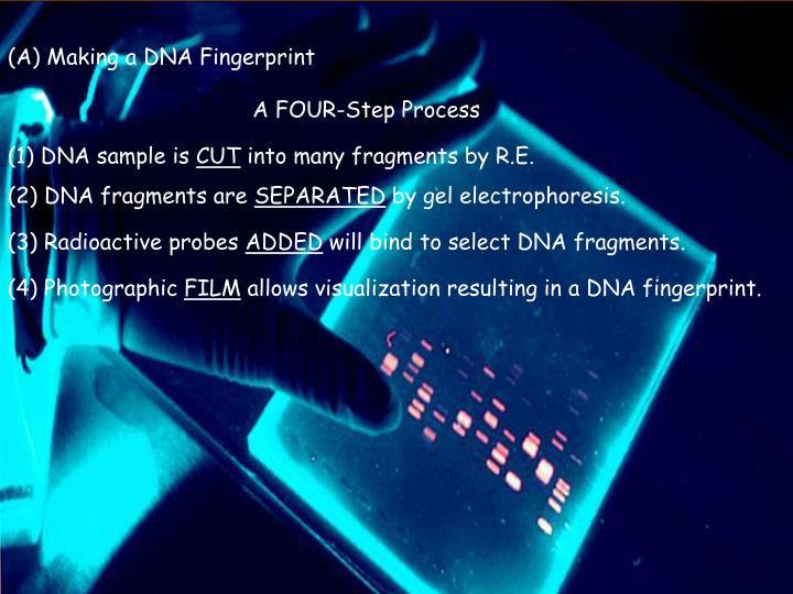 (A) Making a DNA Fingerprint
