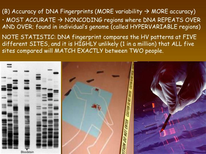 (B) Accuracy of DNA Fingerprints (MORE variability