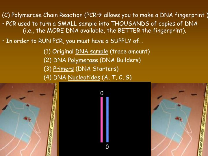 (C) Polymerase Chain Reaction (PCR