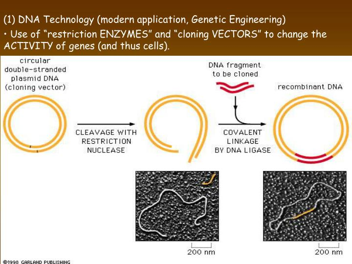 (1) DNA Technology (modern application, Genetic Engineering)