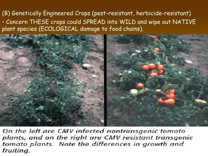 (B) Genetically Engineered Crops (pest-resistant, herbicide-resistant)
