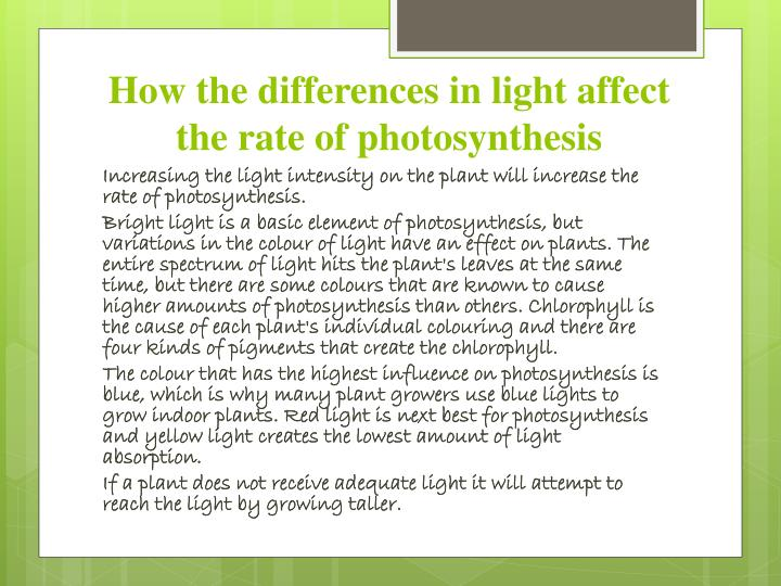 how light affects spinach photosynthesis Used to estimate the photosynthetic performance of individual mesophyll cell layers when white light was applied to the adaxial leaf key words: leaf anatomy , palisade mesophyll, oxygen evolution, photoacoustics, photosynthesis, spinach (spinacia leaf surface affects the potential to evolve o# by the mesophyll cell.