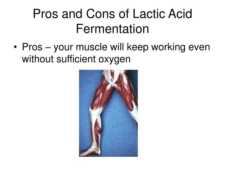 Pros and Cons of Lactic Acid Fermentation