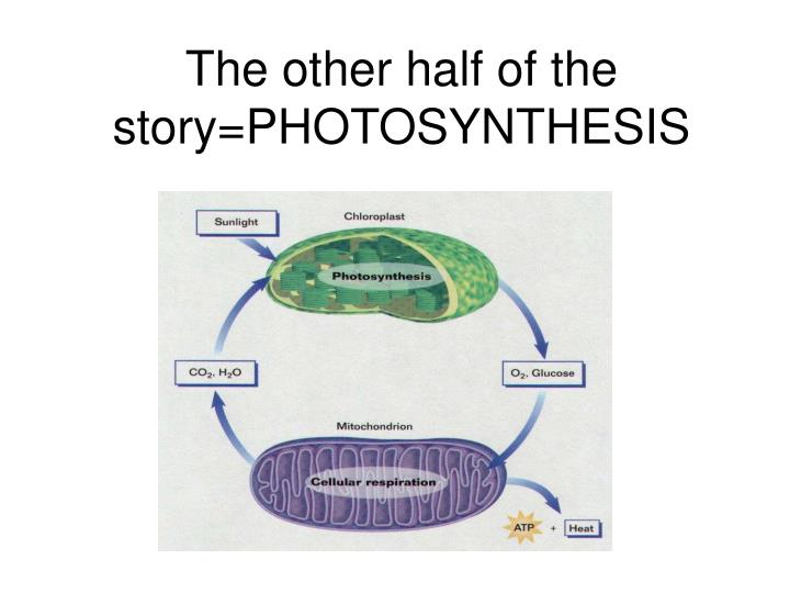The other half of the story=PHOTOSYNTHESIS