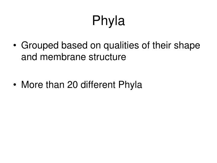 Phyla