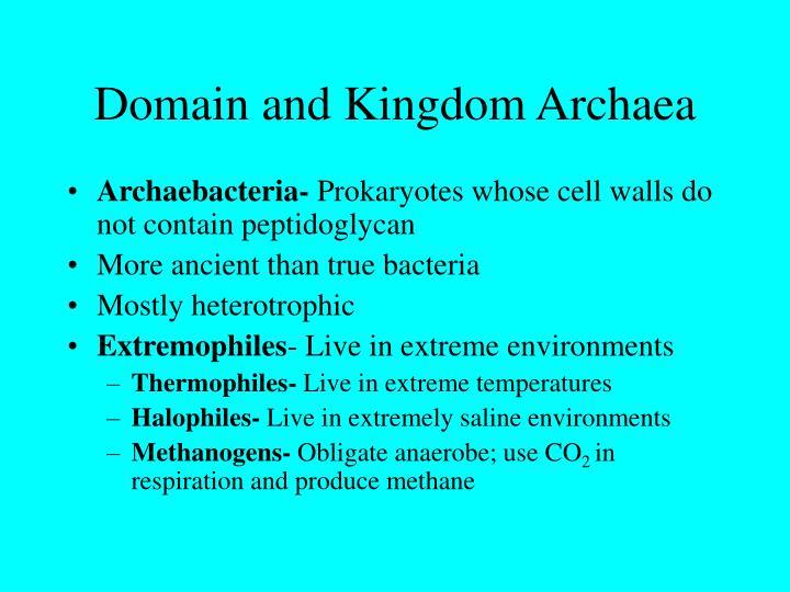 Domain and Kingdom Archaea