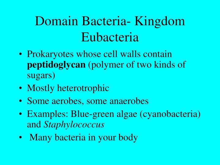 Domain Bacteria- Kingdom Eubacteria