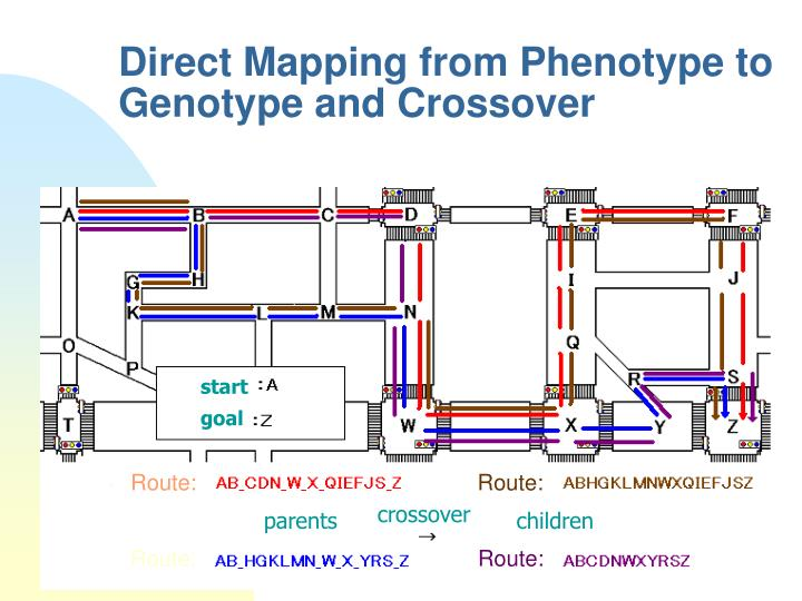 Direct Mapping from Phenotype to Genotype and Crossover