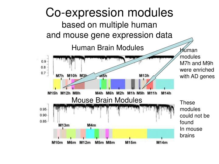 Co-expression modules