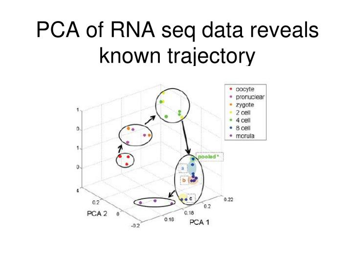PCA of RNA seq data reveals known trajectory