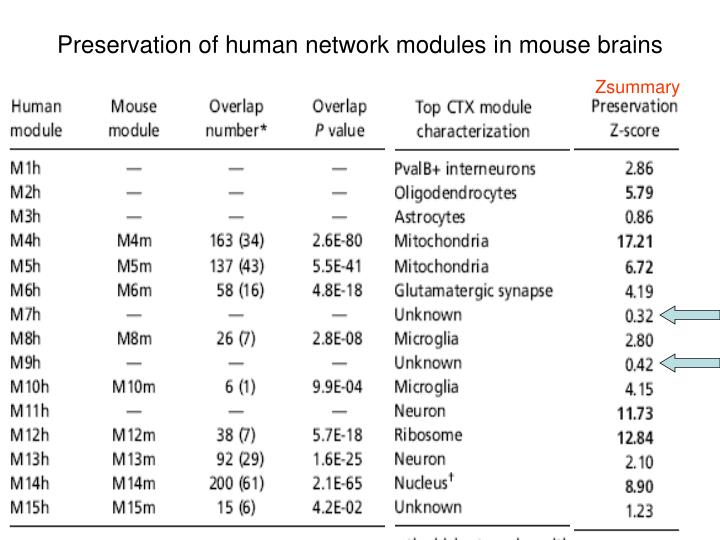 Preservation of human network modules in mouse brains
