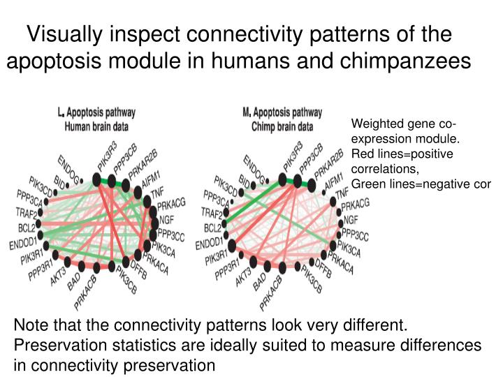 Visually inspect connectivity patterns of the apoptosis module in humans and chimpanzees