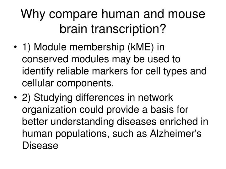 Why compare human and mouse brain transcription?