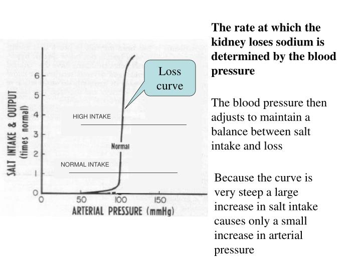 The blood pressure then adjusts to maintain a balance between salt intake and loss