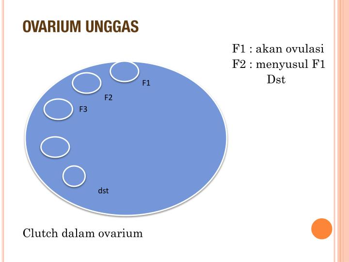 OVARIUM UNGGAS