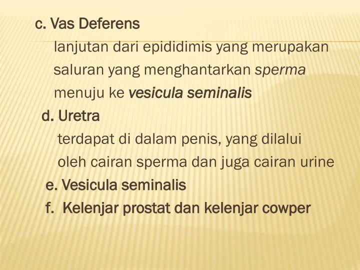 c. Vas Deferens