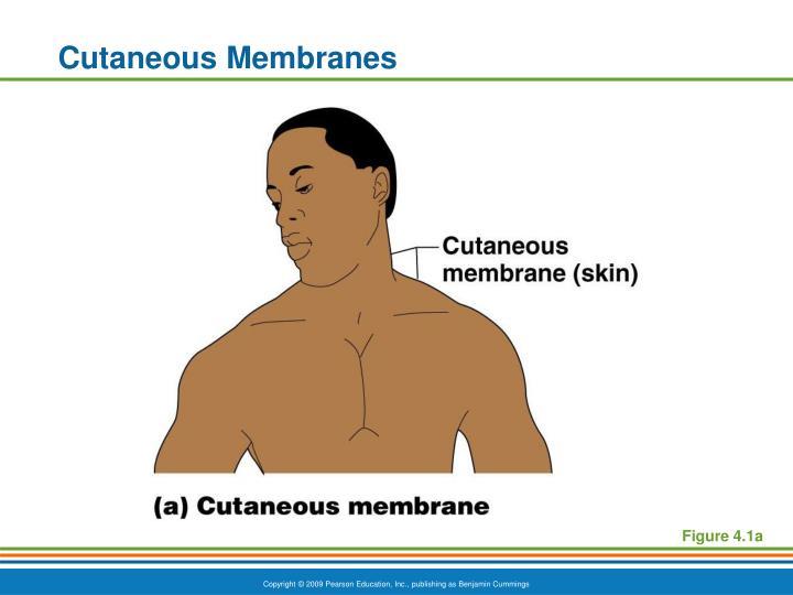 Cutaneous Membranes