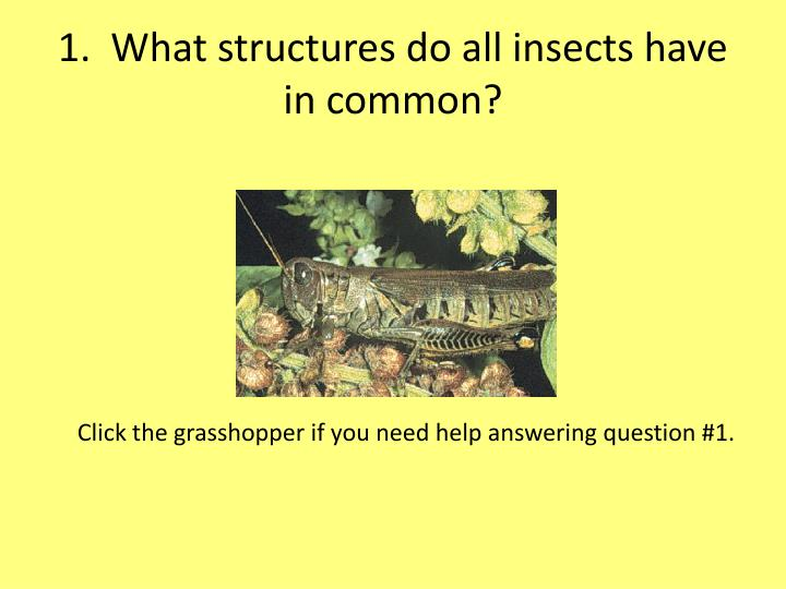 1.  What structures do all insects have in common?