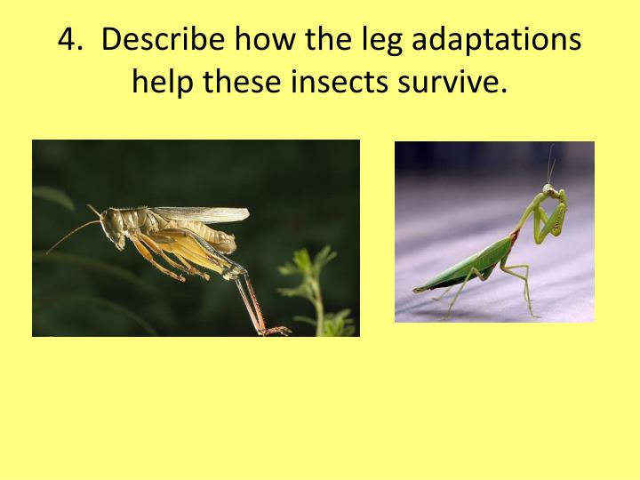 4.  Describe how the leg adaptations help these insects survive.