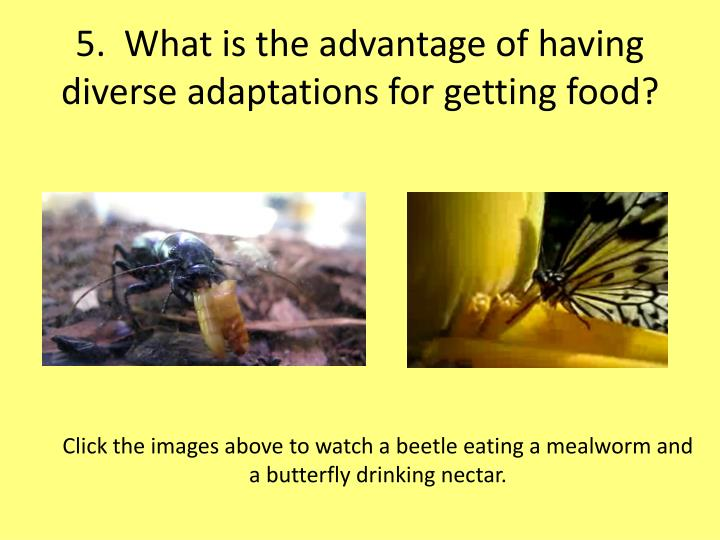5.  What is the advantage of having diverse adaptations for getting food?
