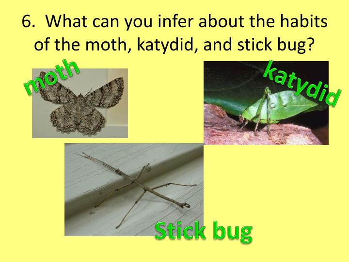 6.  What can you infer about the habits of the moth, katydid, and stick bug?