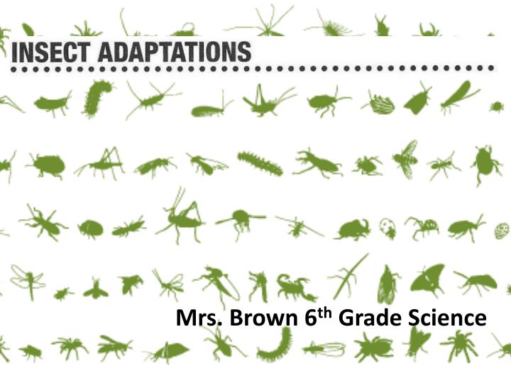 Mrs brown 6 th grade science