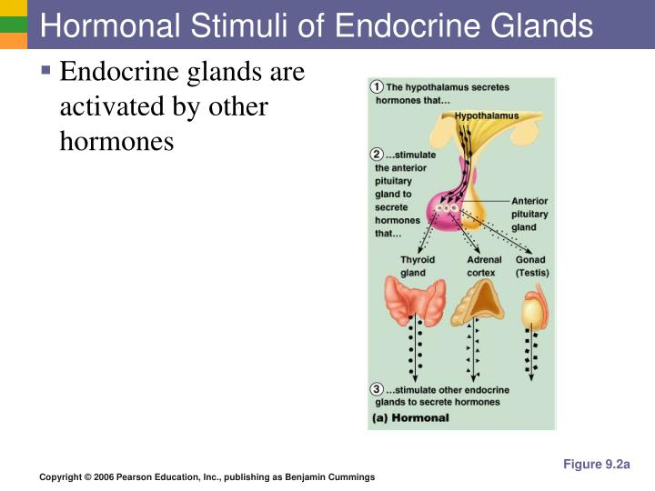 Hormonal Stimuli of Endocrine Glands