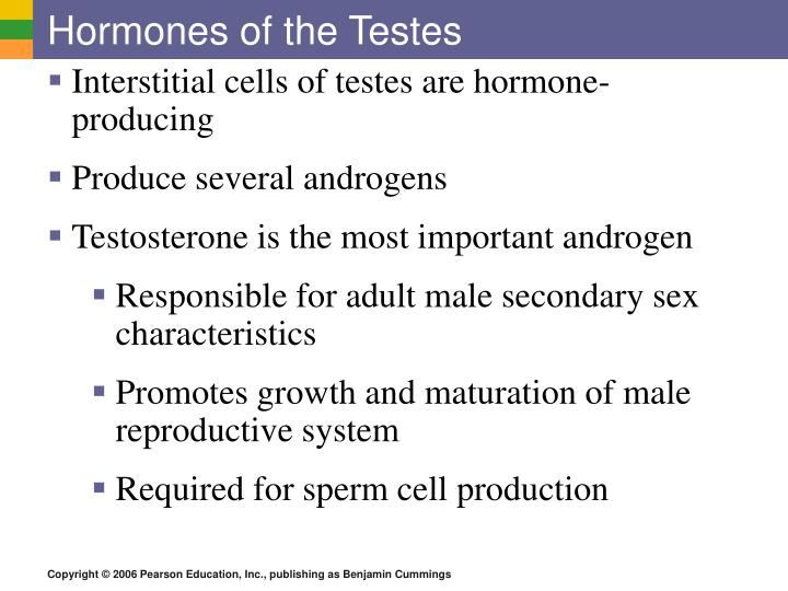 Hormones of the Testes