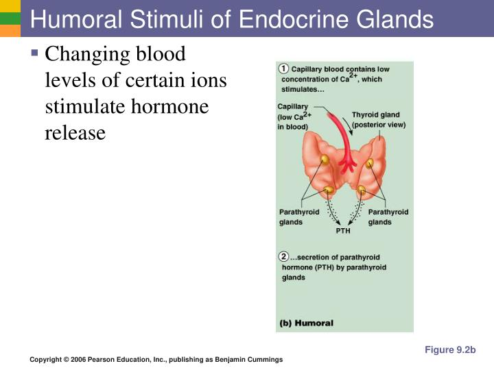 Humoral Stimuli of Endocrine Glands