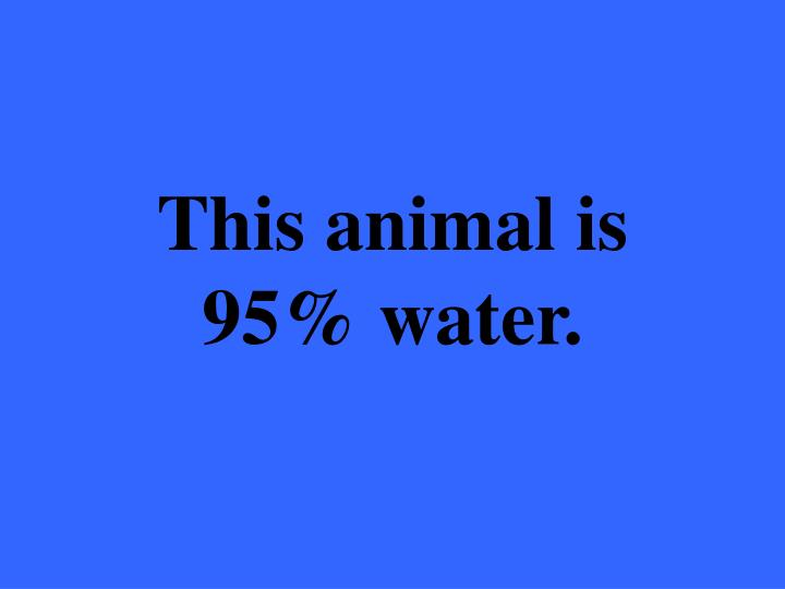This animal is 95% water.