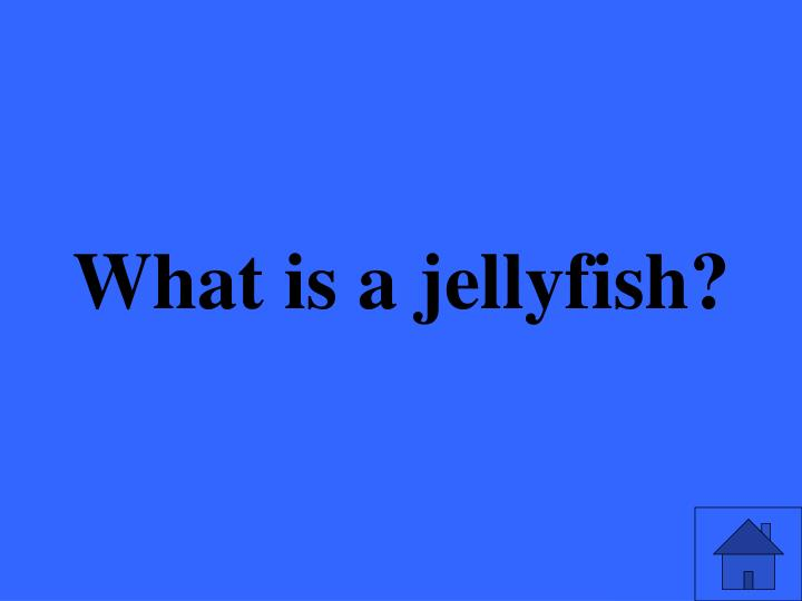What is a jellyfish?