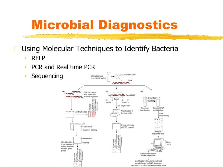 Microbial Diagnostics