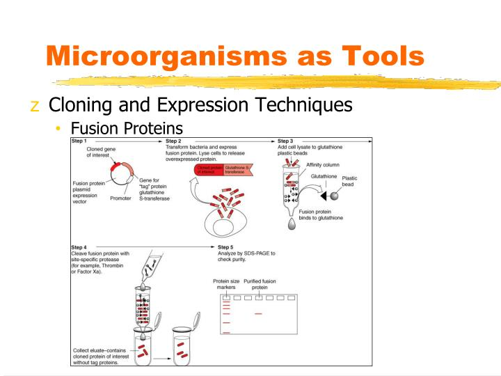 Microorganisms as Tools