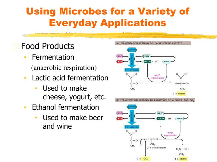 Using Microbes for a Variety of Everyday Applications