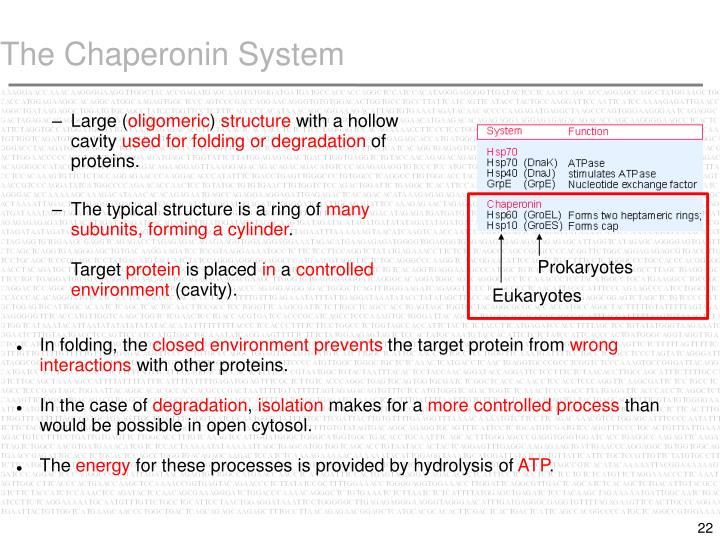 The Chaperonin System
