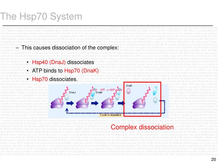 The Hsp70 System