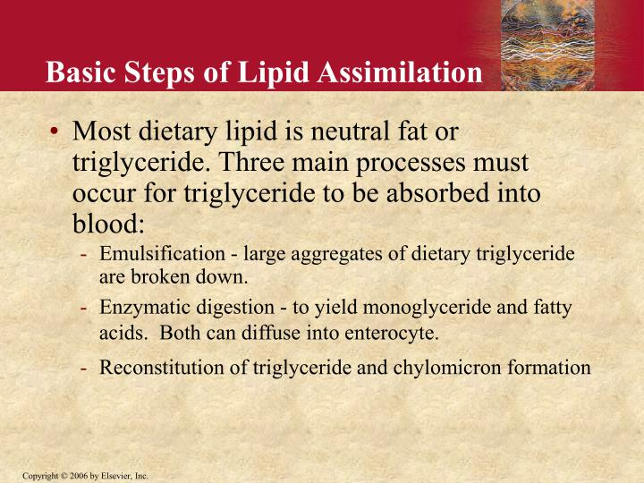 Basic Steps of Lipid Assimilation