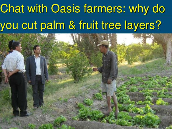 Chat with Oasis farmers: why do you cut palm & fruit tree layers?