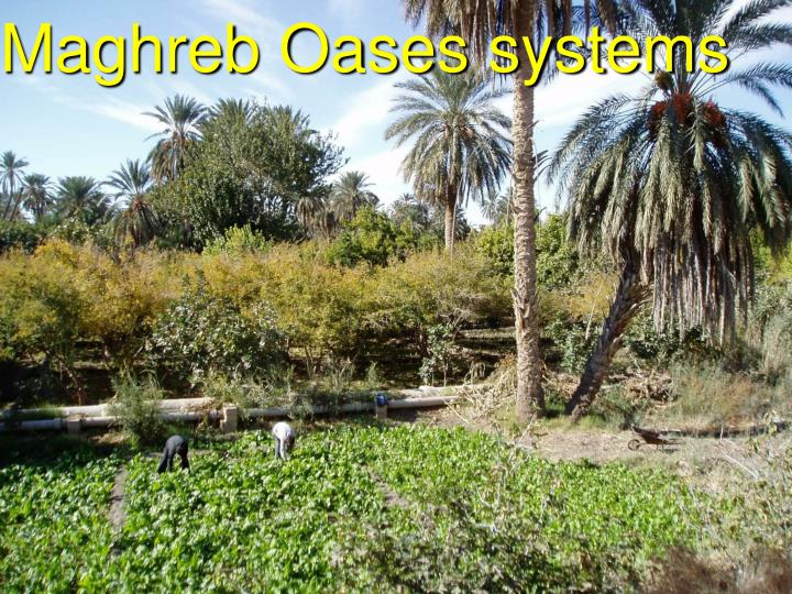 Maghreb Oases systems