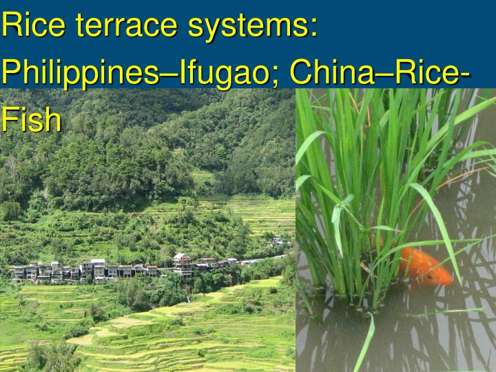 Rice terrace systems: