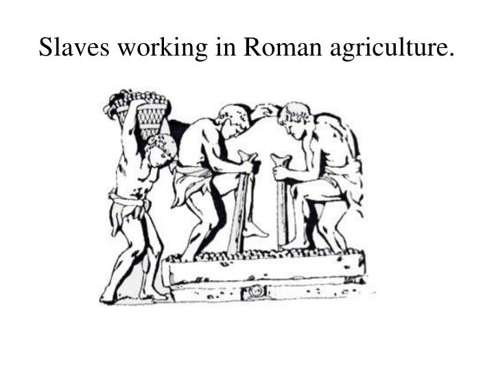 Slaves working in roman agriculture